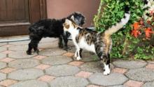 Tipps für die perfekte Tierarzt-Website